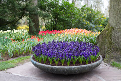 11 Classic Bulbs for Spring Blooms