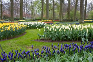 Take a Tour of an Enchanting Bulb Garden in the
