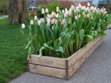 What to Know About Using a Wooden Crate as a Planter Box (9 photos)
