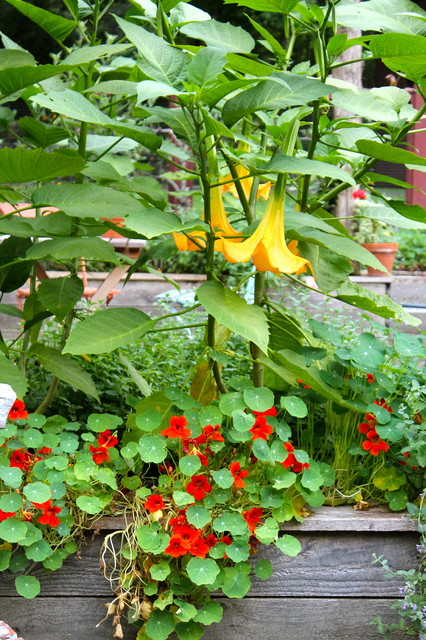 Kitchen Garden: Fragrant (and edible) annuals rustic-landscape