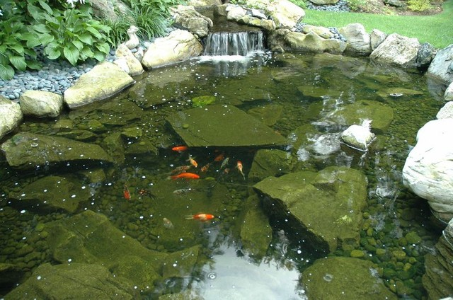 Koi pond traditional landscape other by deck and for Koi pond hiding places