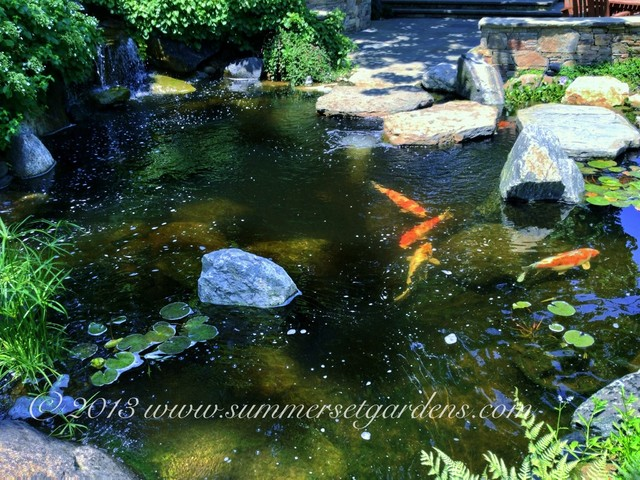Koi pond traditional landscape new york by for How deep should a koi pond be