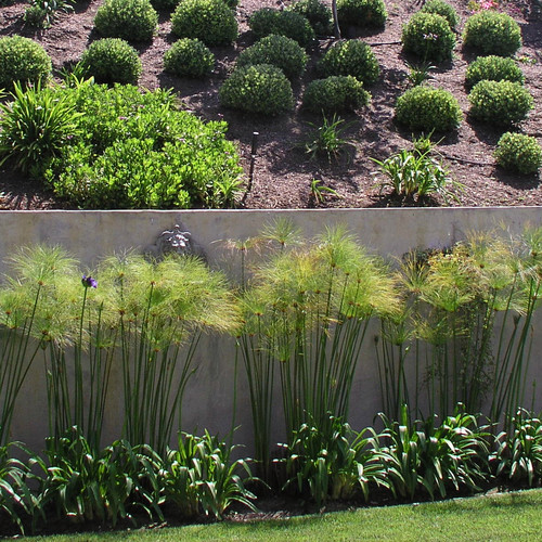 Modern Landscape: What Are The Tall Plants Here, Papyrus?