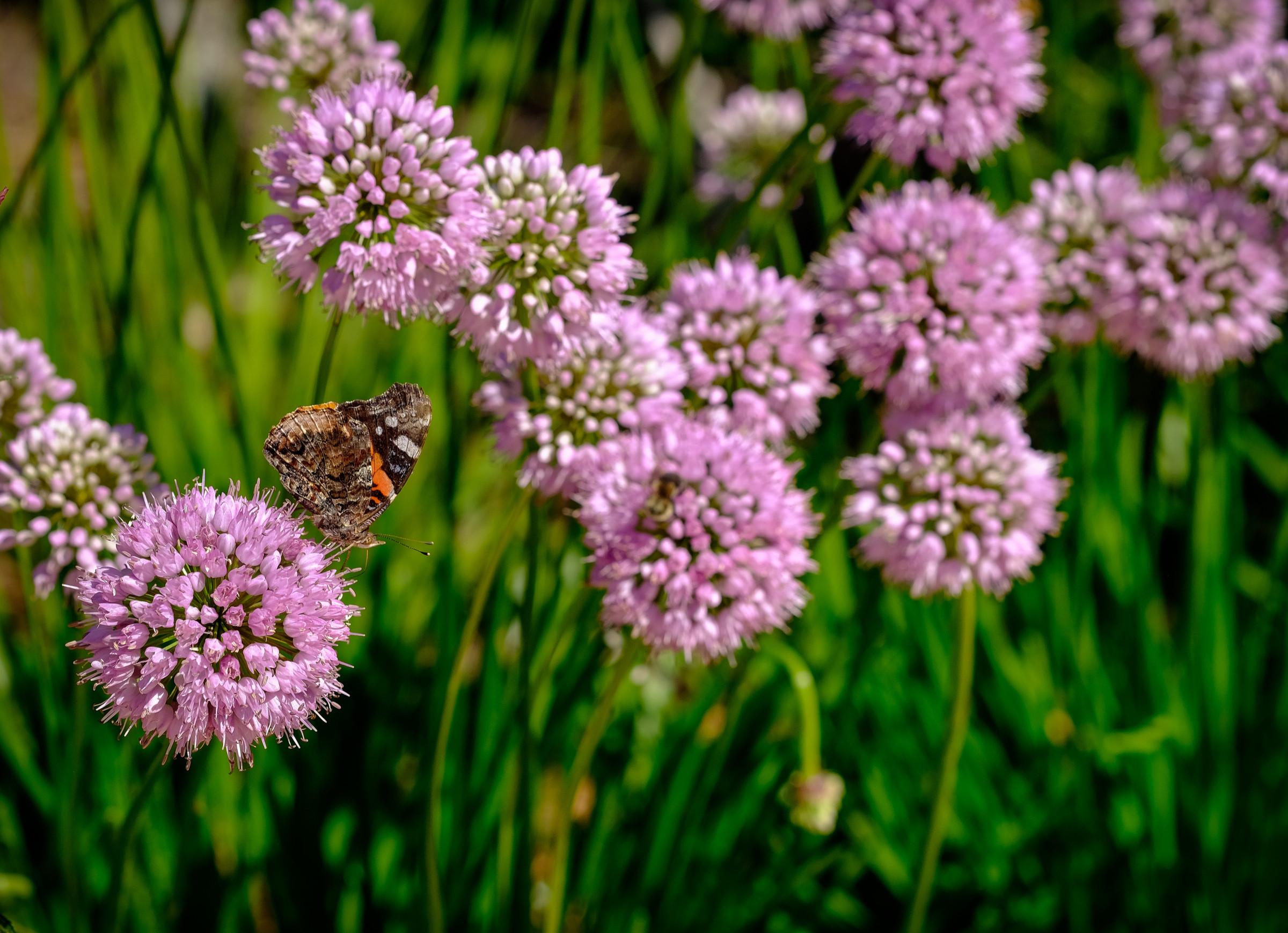 Lake Home Perennial Garden - Oconomowoc