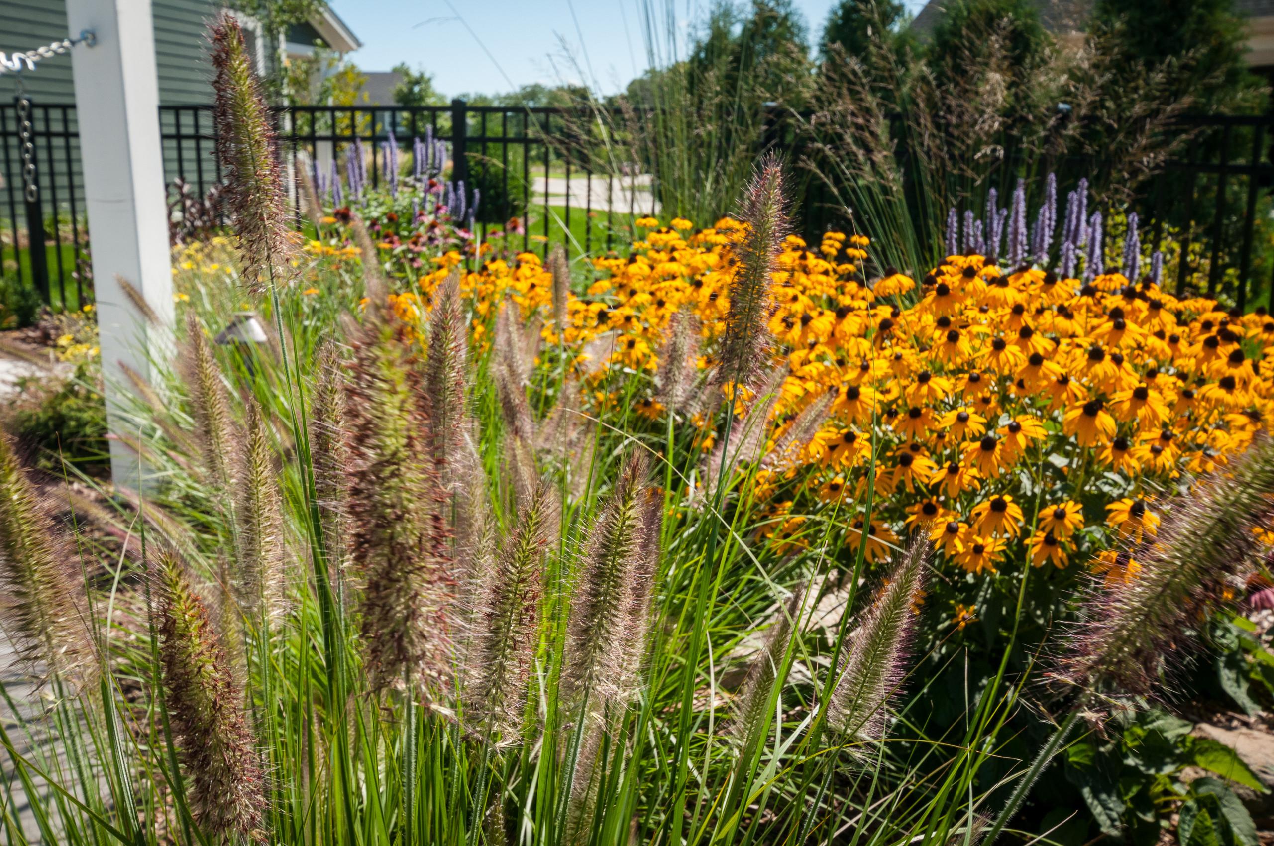 Landscape Design - Plant Combinations