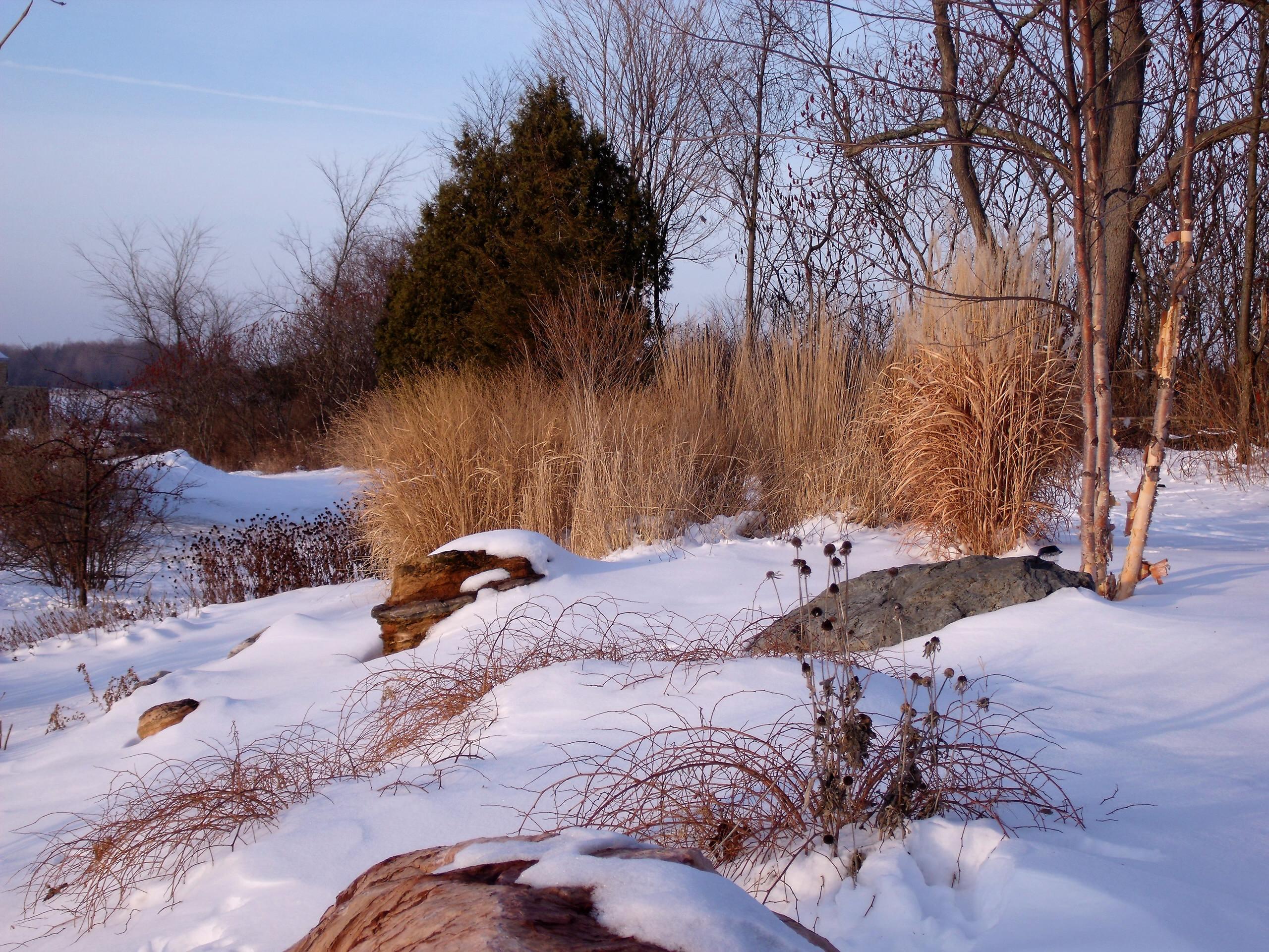 Landscape Expansion