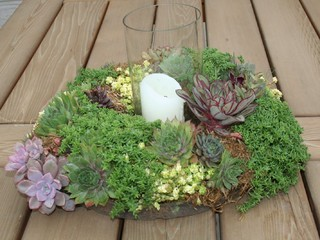 Succulent Wreath Centerpiece  landscape
