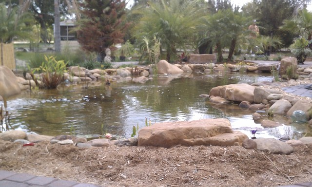Large koi pond with tn river rounds for Koi pond quezon city