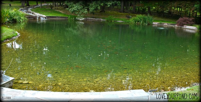 Large Scale Koi Pond W Wetland Filtration Contemporary