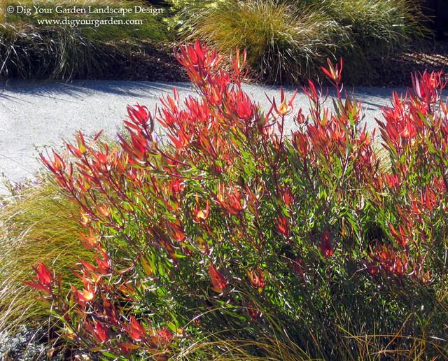 Mediterranean Landscape by Dig Your Garden Landscape Design