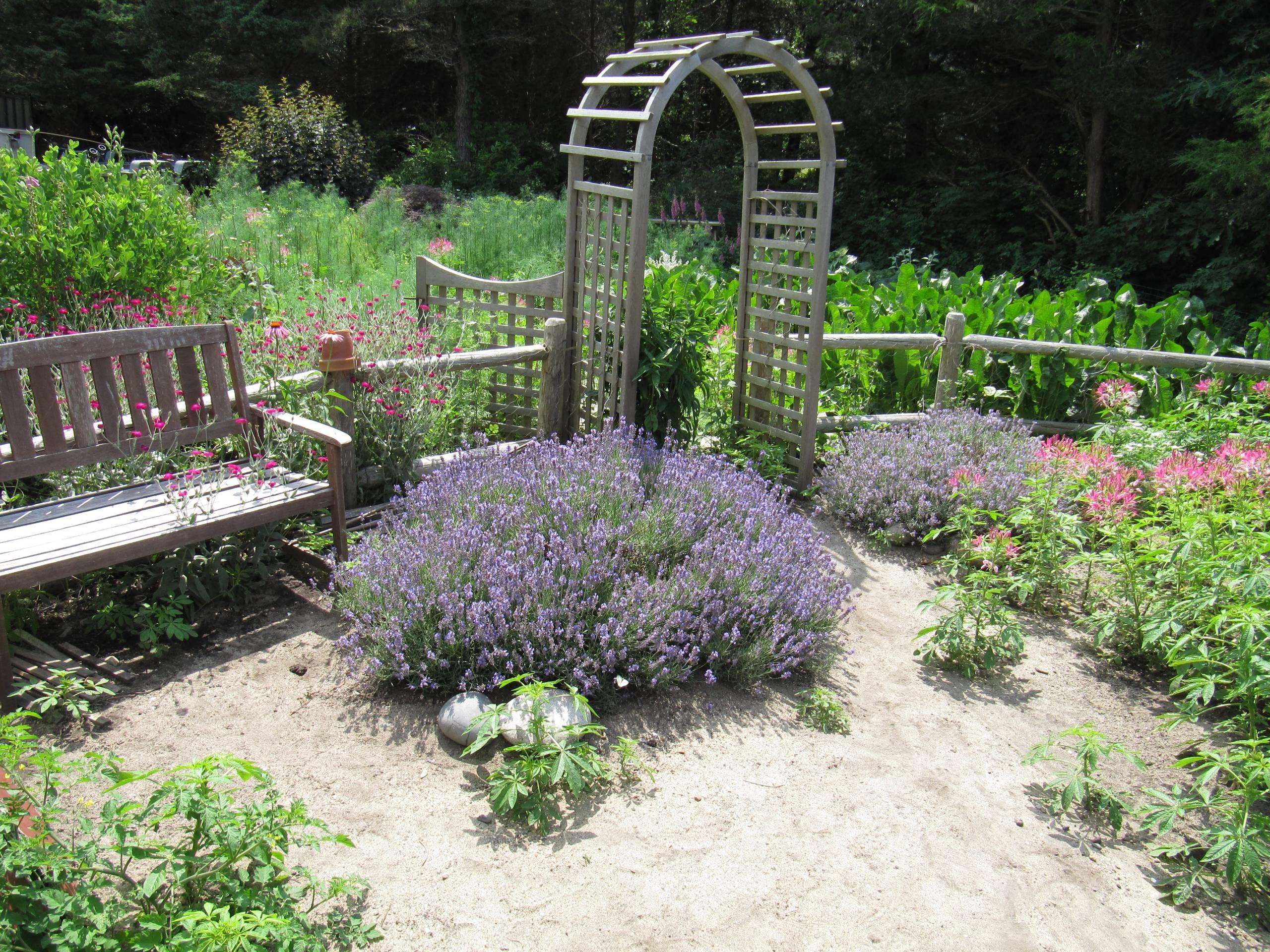 Littlefield Farm : My Garden