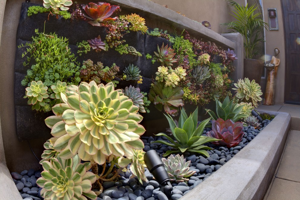 Photo of a contemporary landscaping in San Diego.