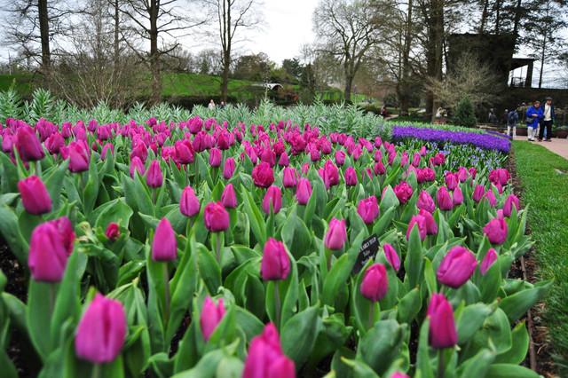 Longwood Gardens 2012 traditional-landscape