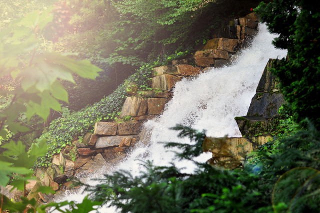 Longwood Gardens traditional-landscape