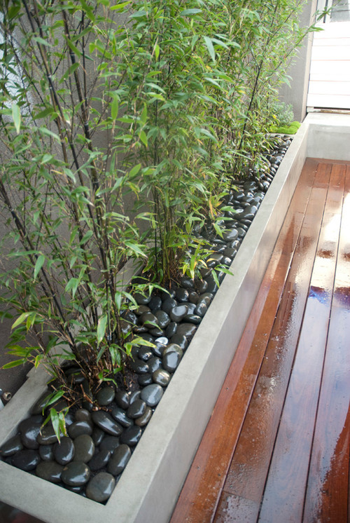 Bamboo Landscaping Guide Design Ideas PRO Tips