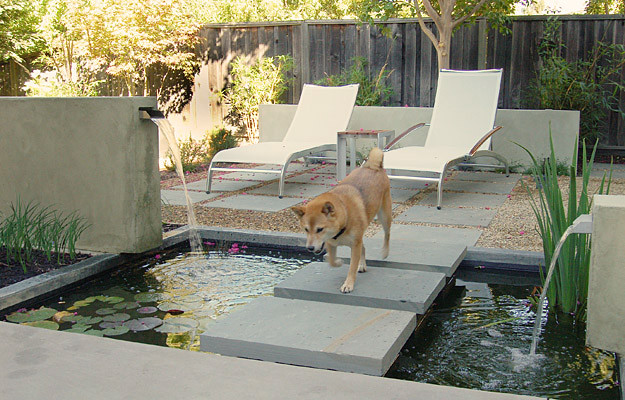 Pet friendly and contemporary landscaping ideas home for Garden designs for dogs