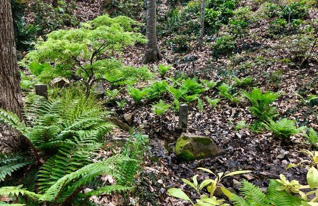 March 2019 in the fern glen eclectic-landscape