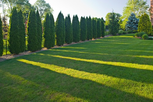 Truly Beautiful Landscaping What Type Of Privacy Trees