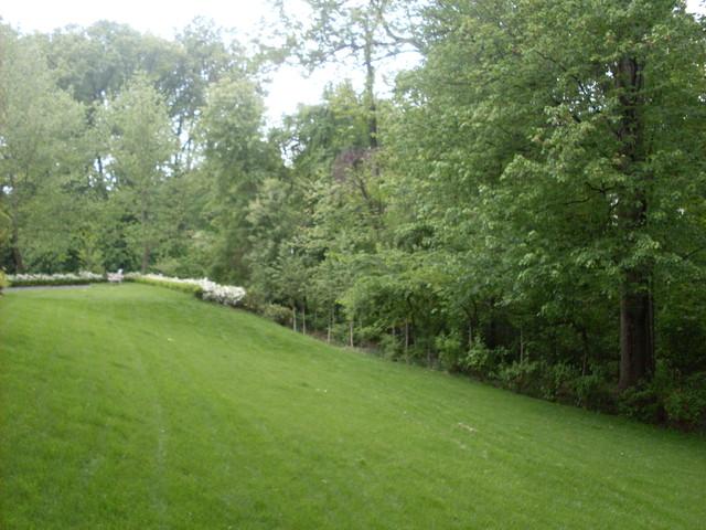 McLeish - Azaleas & Clean Lines traditional-landscape