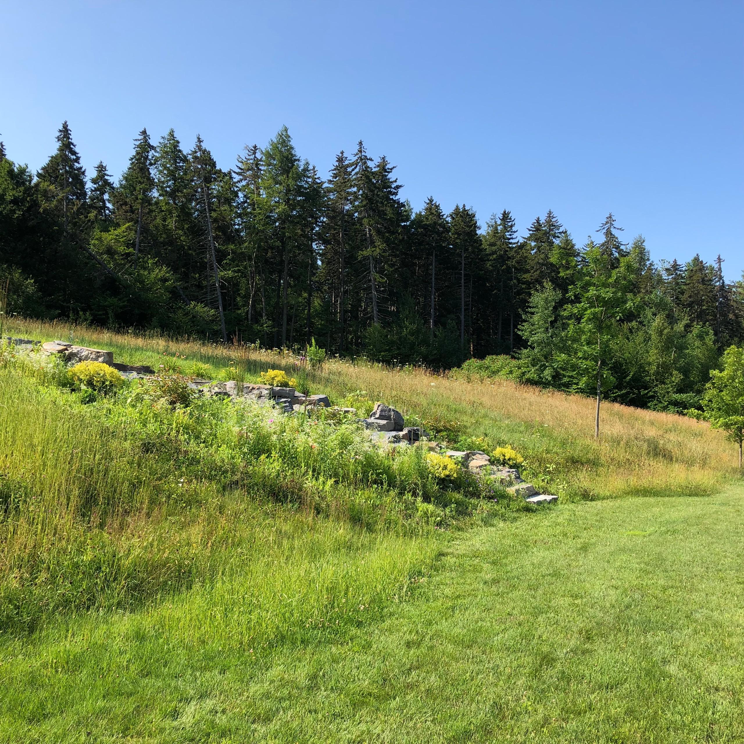 Meadow Walk
