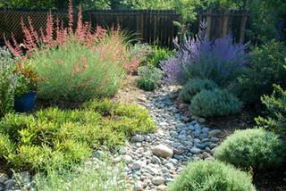 Colorado Springs Xeriscape Garden Mediterranean