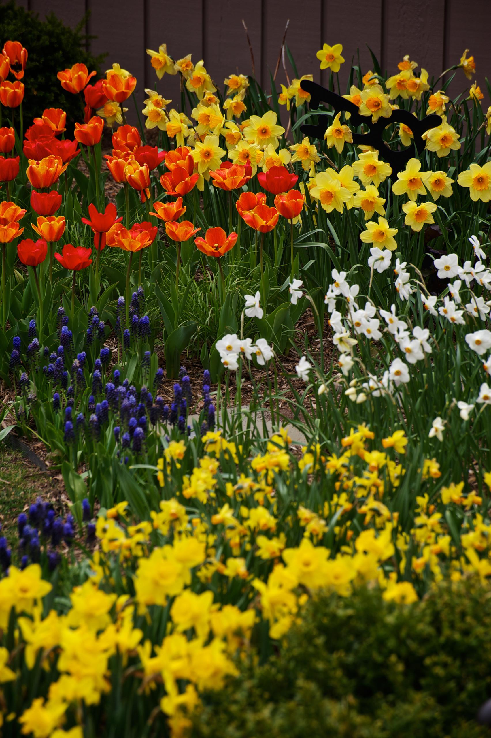 Mequon - Spring Bulb Splendor