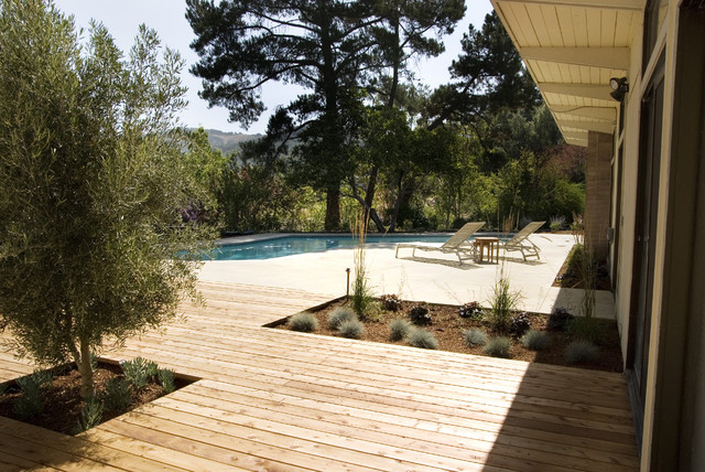 Mid Century Modern  Garden Rehab Modern Landscape
