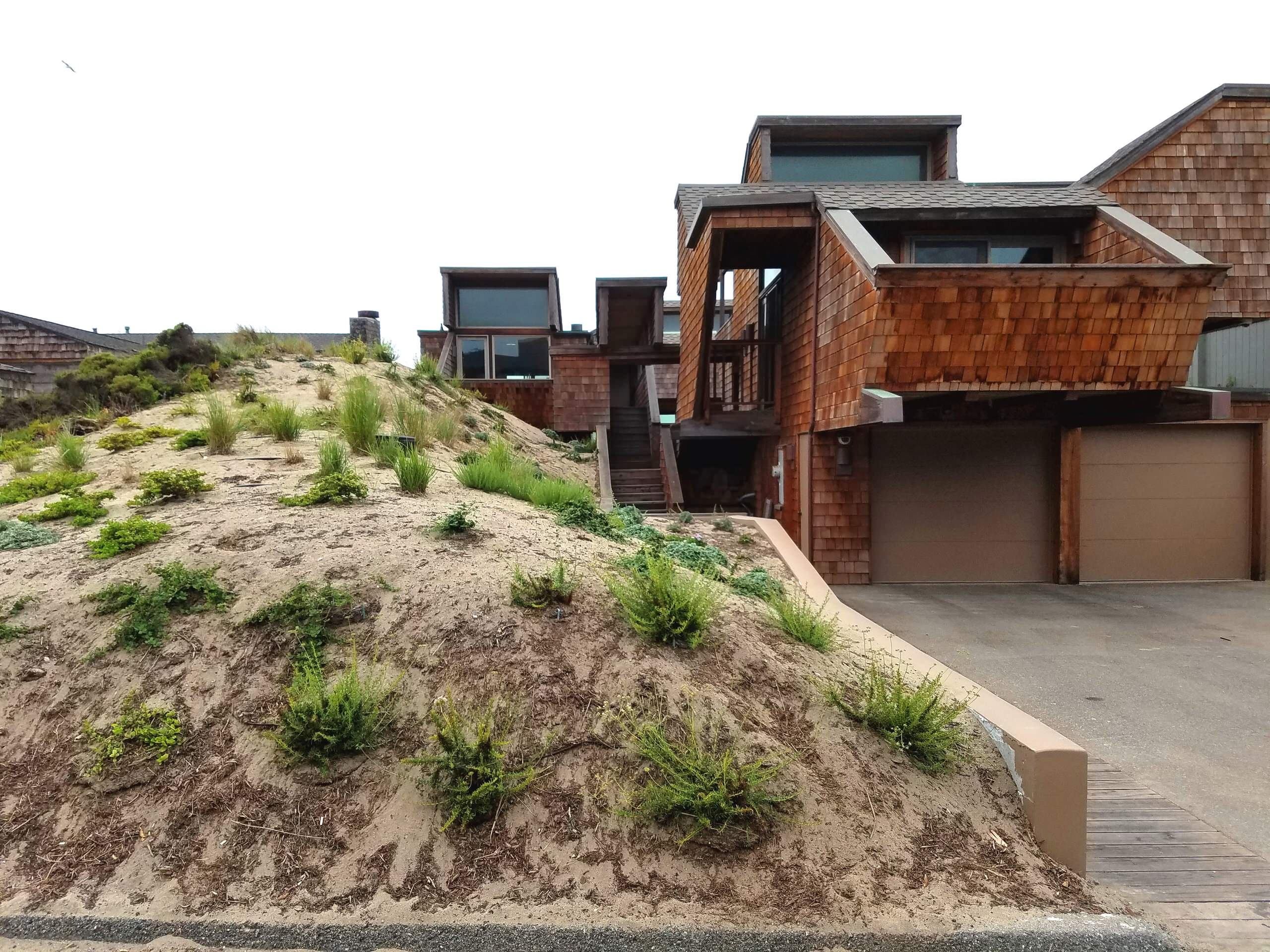 Mid-Century Modern in the Dunes