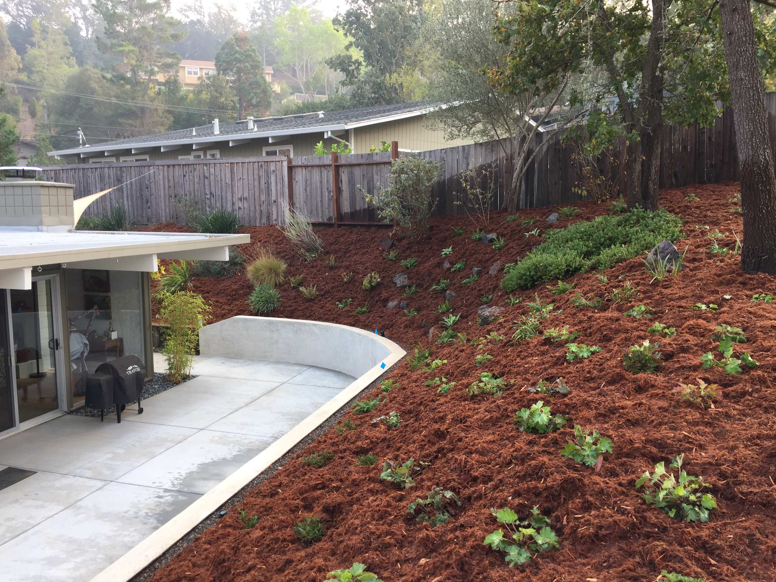 Ah, what a lucky day to get the call to help a wonderful couple with the landscape adorning their lovely Eichler home nestled next to open space in the warm hills of San Rafael. There was a failing wo