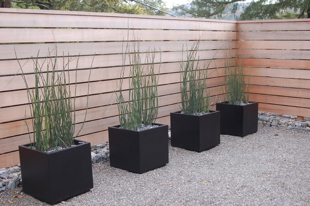 Design ideas for a modern backyard gravel landscaping in San Francisco.