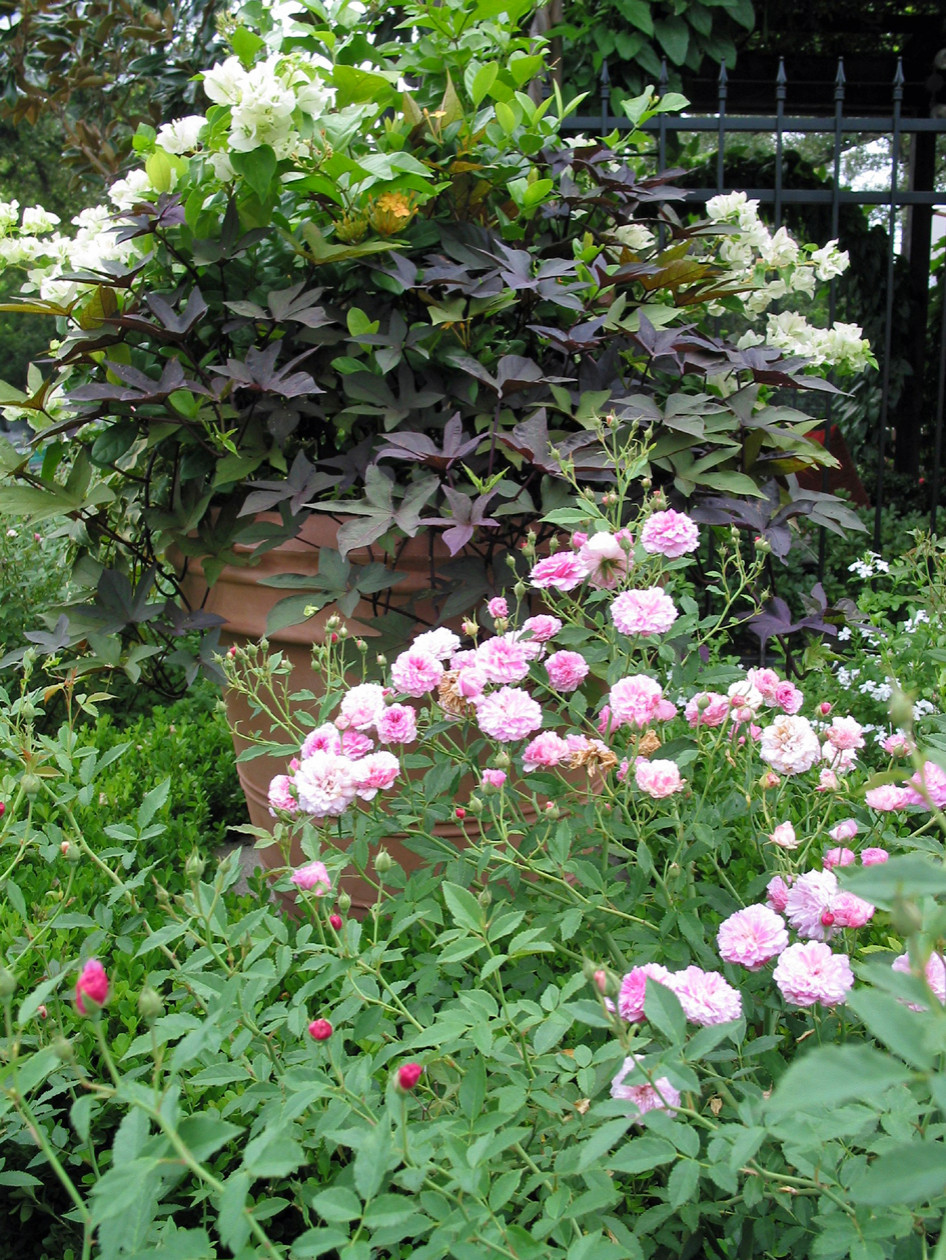 Miscellaneous Gardens and Pretty Things