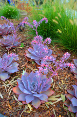 Great Design Plants: Stars of the Succulent Garden