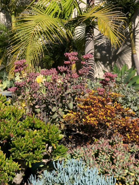 Modern Drought Tolerant Landscape in Bankers Hill