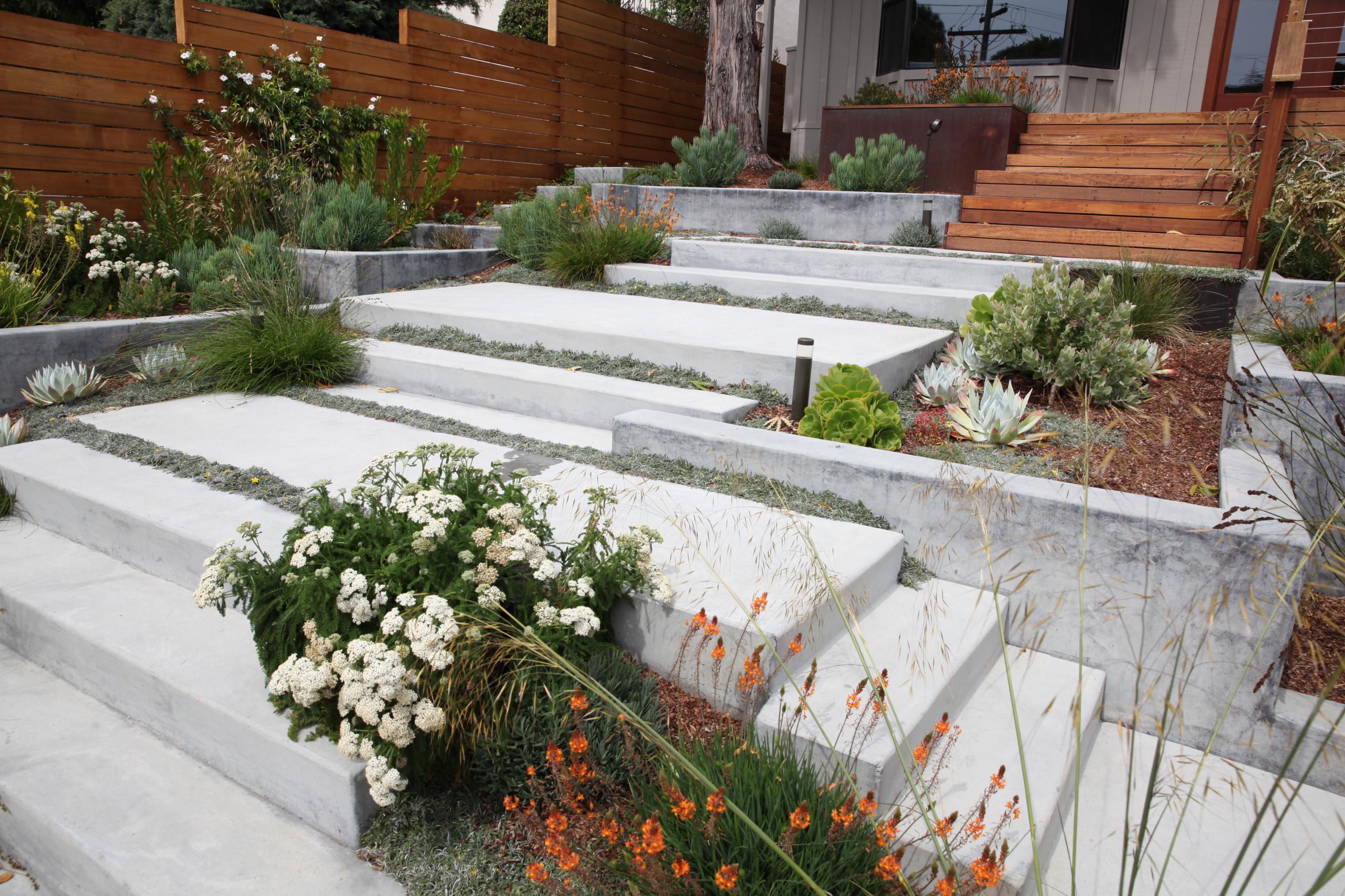 Modern Belmont Entry Garden