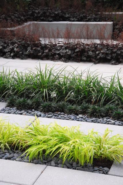 Modern courtyard modern landscape san francisco by for Contemporary garden grasses
