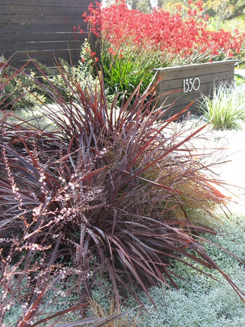 Succulent Planter Wall Contemporary Landscape San Diego By