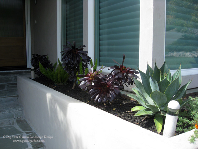 Modern Landscape And Planters With Architectural Plants