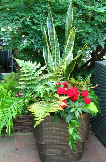 7 Fabulous Shade Loving Ferns For Containers
