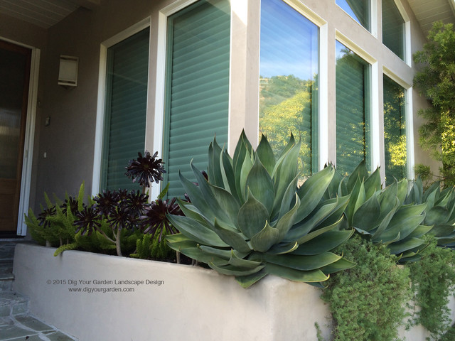 Modern Landscaping With Succulents : Modern landscape with architectural plants and succulents