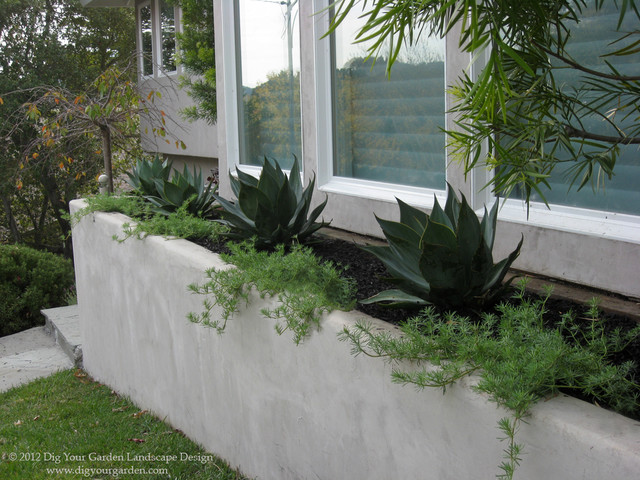 Modern landscape with architectural plants modern for Plants for contemporary garden design