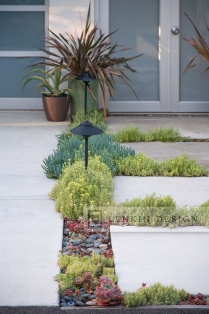 Modern Pavers Planted With Succulents Contemporary