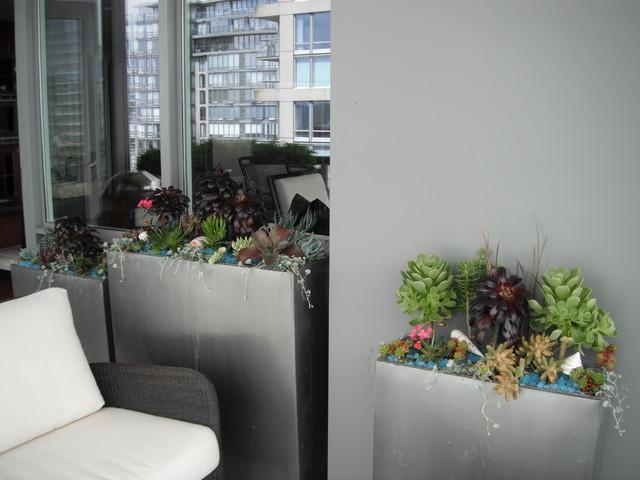 Modern Landscaping With Succulents : Modern succulent garden contemporary landscape