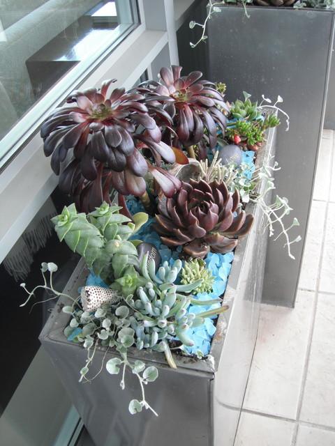 Modern Succulent Garden contemporary-landscape