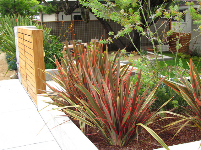 Great design plant new zealand flax for Native garden designs nz