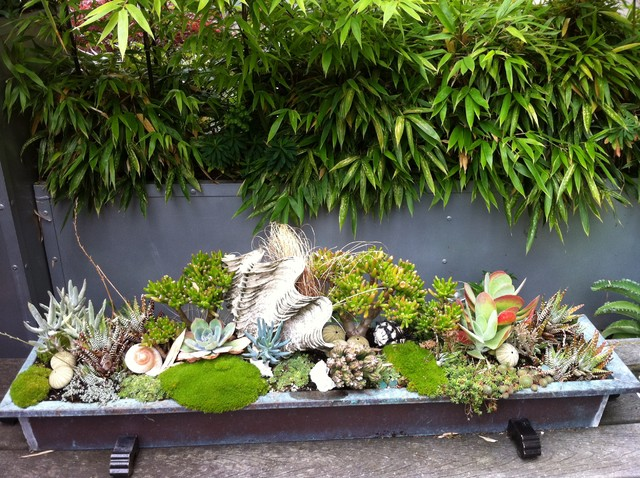 Brilliant Garden Design Tropical Antonia Schofield And Ideas