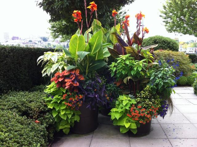 Modern tropical garden 2013 tropical landscape for Tropical flower garden landscape designs