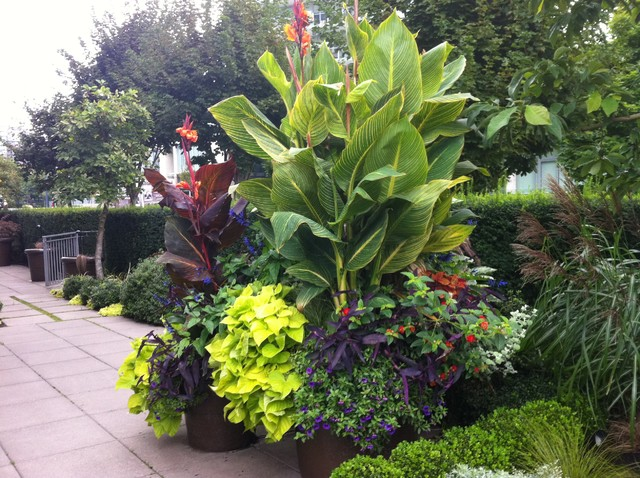 Modern tropical tropical landscape vancouver by for Landscaping rocks vancouver