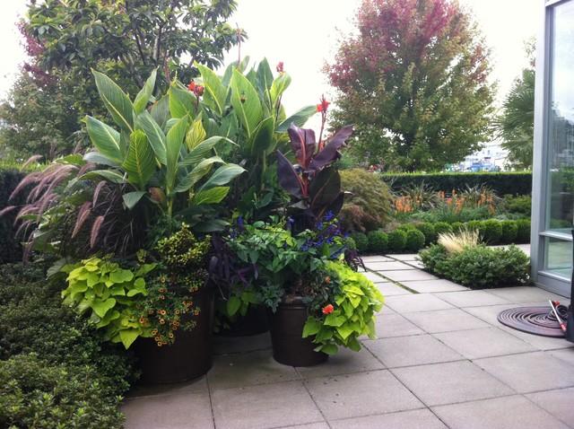 Modern tropical tropical garden vancouver by for Garden design vancouver