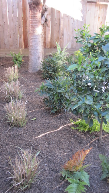 Modern with citrus and ornamental grasses traditional for Modern ornamental grasses