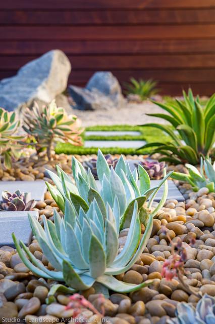 Modern Zen Garden Desert Succulent Planting Contemporary
